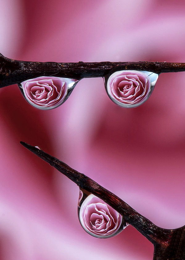 Dave Wood - Macro Photography (6)