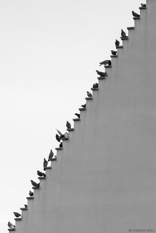 Pigeons Stairs By © Stefan Holl